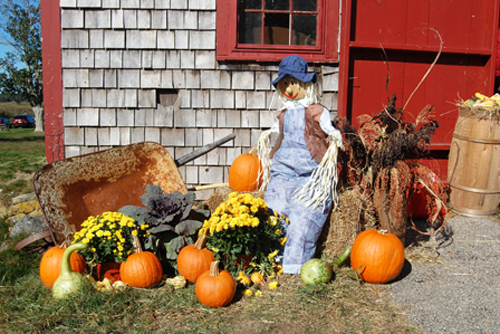 Pumpkins and scarecrows at the Fall Festival