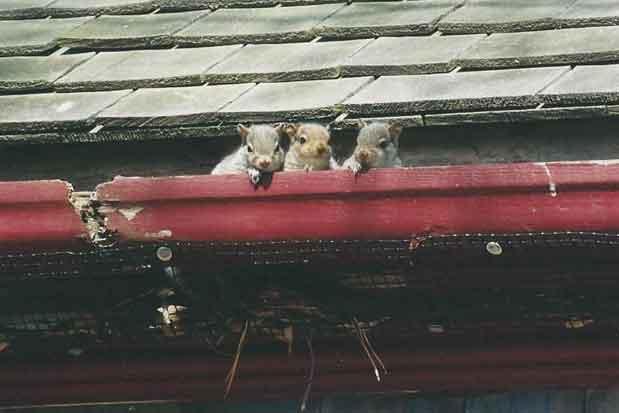 Last residents of the farmhouse